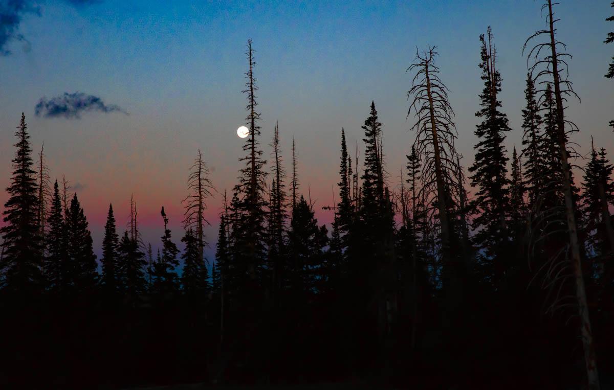 달밤.jpg