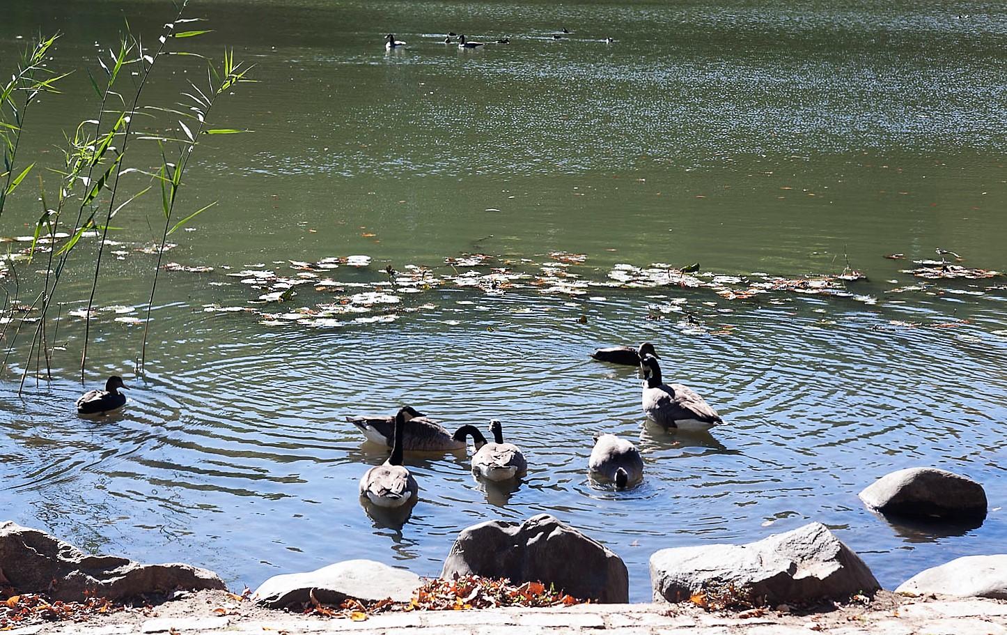 초급반출사 오클랜드 호수1 (2).jpg